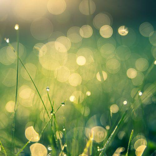 meadow-4485609_1920 (1)
